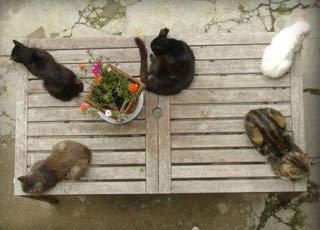 I gatti di Daniele Bonfanti presidente della casa editrice XII