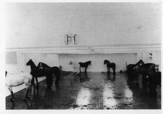 Foto dei cavalli di Kounellis
