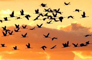 Tramonto e uccelli in volo in Patagonia