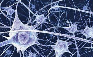 Foto di sinapsi