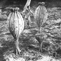 Base Luna chiama Terra di N. Juran