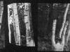 holy_wood_01