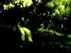 holy_wood_07
