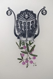 Ritratto della mimosa pudica