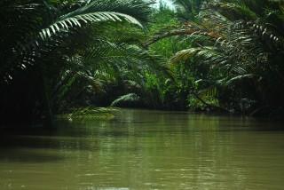 scenario fluviale-tropicale